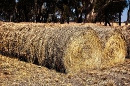 haystack-260x173.jpg