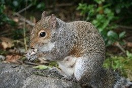 squirrel-260x173.jpg
